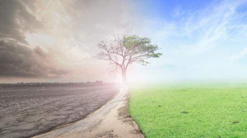 Uma ilustração fotográfica de solo seco e desolado tornando-se num solo com folhas verdes e uma árvore morta com folhas a crescer.