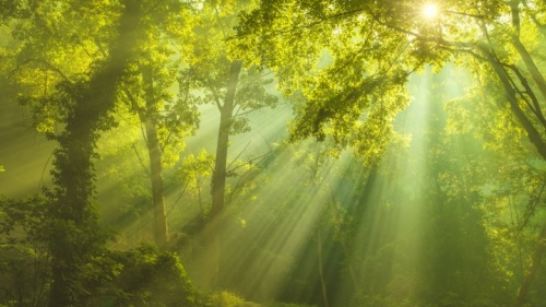 Luz do sol brilhando através das árvores.
