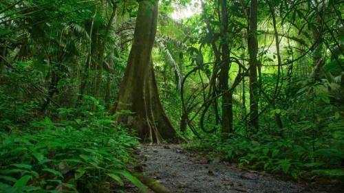 Um caminho que leva a uma densa selva de vegetação.