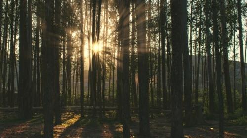 A luz do sol através árvores.