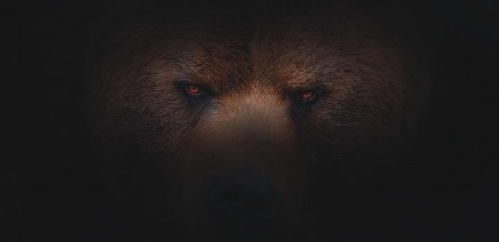 Os olhos de um urso.