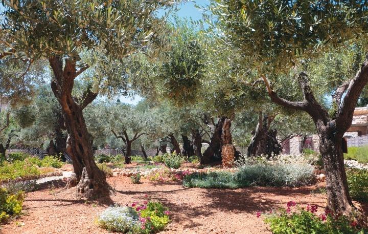 Jardim do Getsêmani