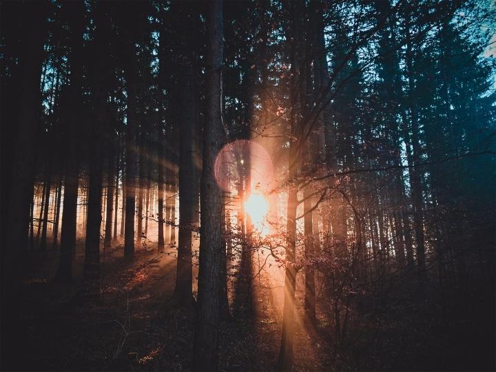 Raios de sol brilhando através de uma floresta.